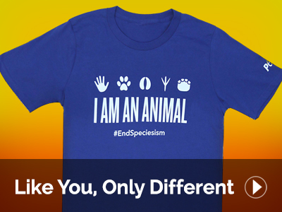 PETA Shop | Support our work with animal rights merchandise!